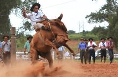 Fernando Azambuja e Marreco (Eduardo Amorim) Tags: gaúcho gaúchos gaucho gauchos cavalos caballos horses chevaux cavalli pferde caballo horse cheval cavallo pferd pampa campanha fronteira quaraí riograndedosul brésil brasil sudamérica südamerika suramérica américadosul southamerica amériquedusud americameridionale américadelsur americadelsud cavalo 馬 حصان 马 лошадь ঘোড়া 말 סוס ม้า häst hest hevonen άλογο brazil eduardoamorim gineteada jineteada