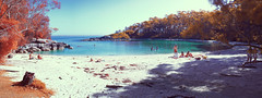 Honeymoon Bay (OzzRod) Tags: pentax k5 fullspectrumconverted smcpentaxm35mmf28 ir infrared vegetation beach bay recreation honeymoonbay beecroftpeninsula jervisbay nsw stitch panorama