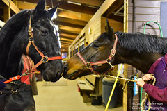 Curious new friends (lauren3838 photography) Tags: laurensphotography lauren3838photography moments equine horse rescue barn friends thoroughbreds newjersey nj nikon d750 tamron tamron2875mm28