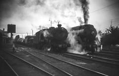 3647 on Up Goods Train (oz_lightning) Tags: agfact18 australia canonpixmamg8150 filmscan mossvale nsw southernhighlands film goods railways scan slide steam trains newsouthwales aus halinasuper35x 35mmfilmcamera