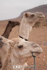 Morocco (David Simchock Photography) Tags: 2006 africa davidsimchock davidsimchockphotography dijoncreativesolutions morocco nikon vagabondvistas clientequatorialtravel image photo photograph photography travel travelphotography