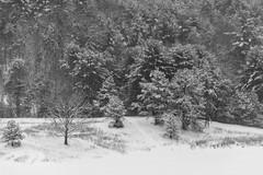 quabbinreservoir2019-83 (gtxjimmy) Tags: nikond7500 nikon d7500 winter snow quabbinreservoir swiftriver ware belchertown massachusetts watersupply newengland quabbin