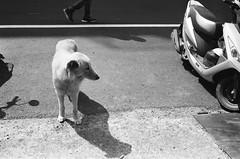 When you love someone (Janeprogram) Tags: пленка 35mm blackandwhite bnwphotography filmphotography ilfordpan100