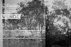 (intivisible) Tags: tmax100 film 35mm analog analogic analógica chinon35fee blackandwhite blancoynegro byn bw bn dobleexposición doubleexposure vende sell trees árboles nature naturaleza cartel sign