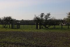 brill walk-190401-56.jpg (Phil Mercer-Kelly) Tags: sunshine spring radiooxford bbc counyryside blossom philmercer getactive brill sheep buckinghamshire europe england uk oxfordshire views bucks health windmill walker oakley walk