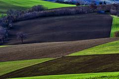 Colline marchigiane in inverno (luporosso) Tags: natura nature naturaleza naturalmente nikond500 nikonitalia colline hills campagna campi country countryside marche italia italy distesaerbosa