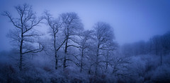 Seeking Height (Unleash The Dragon Ltd) Tags: snow winter woods tree poetry composition art a7iii a73 nature beauty mist fog landscape light