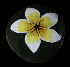 Rock With Painted White And Yellow Flower (Bill Gracey 22 Million Views) Tags: maria rockpainting offcameraflash homestudio tabletopphotography macrolens color colorful painting yongnuo yongnuorf603n blackbackground perspex acrylicpaint softbox lastoliteezbox lakeside yellow sidelighting filllight white