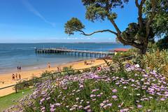 New Years Day : Cowes Beach, Phillip Island (Derek Midgley) Tags: img3338 cowes beach phillip island people bathers sunshine beautiful sandy ocean flowers seashore