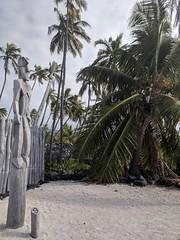 Postcards from the Big Island - Palms, Totems, Lava and Big Waves (Pushapoze (NMP)) Tags: hawaiii bigisland pacific ocean lava deadwood palms blue sky ciel cocotier