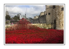 Poppies at Tower (Audrey A Jackson) Tags: canon60d london city toweroflondon history remebrance poppies colour