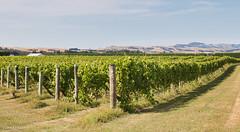 190128 095954 (Vibeke Friis) Tags: martinborough wellingtonregion newzealand nz