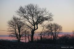 Aurore (Stephanos72) Tags: aurore sunrise campagne arbre