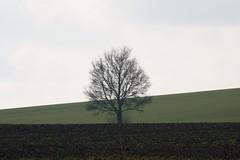 preetz_DSC04345 (ghoermann) Tags: deu geo:lat=5419686648 geo:lon=1026906889 geotagged germany kühren schleswigholstein landscape winter tree