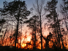 Colorful Sunset. (dccradio) Tags: lumberton nc northcarolina robesoncounty outdoor outdoors outside nature natural sunset evening eveningsky february winter goodevening saturday saturdaynight saturdayevening canon powershot elph 520hs tree trees treebranch treebranches branch branches treelimb treelimbs beauty scenic woods forest wooded settingsun eveningcolors daylightends eveningbegins silhouette