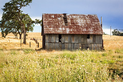 Barn with Metal Roof (Randy Bayne) Tags: abandoned barn building corrugated grass green metal old roof rust rusted tree yellow calaveras california landscape rural