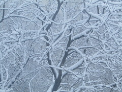 """""""snow painting"""" (VERUSHKA4) Tags: tree neige branch bough nature white canon winter hiver wintertime snowfall europe russia moscow ville city cityscape yard day season february grey neve view vue"""