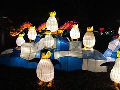 OH Columbus - Ohio Chinese Lantern Festival 46 (scottamus) Tags: columbus ohio franklincounty holiday winter christmas light lanter display night ohiochineselanternfestival dragonlightscolumbus penguins