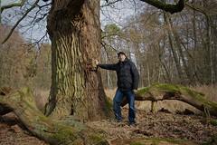 Mönchbruchwald (nordelch61) Tags: deutschland hessen heimat naturschutzgebiet mönchbruch mörfeldenwalldorf rüsselsheim wald bäume totholz moos äste wurzeln zweige forest trees roots wood rieseneiche muleiche eiche uralt