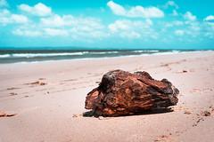 Browns&Blues (emiel bleidd) Tags: roja brown blue rock wood beach sky sand clouds sharp sharpness landscape landscapephoto color contrast sea ocean sony sonya7ii a7 a72 a7ii
