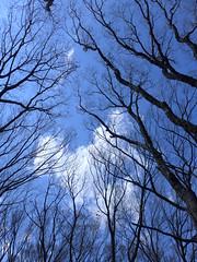 19o1627 (kimagurenote) Tags: tree 東高根森林公園 higashitakane forest park 川崎市宮前区 miyamaekawasaki