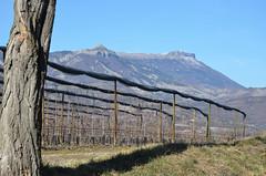 En vue des Hautes-Alpes (RarOiseau) Tags: alpesdehauteprovence montagne montagnedecéüse petitecéüse arboriculture claret