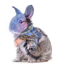 Animals. Rabbit isolated on a white background (Brayan Molina 007) Tags: rabbit isolated white animal background young fluffy mammal bunny gray cute wild one domestic fur little adorable furry small vertebrate grey pets farm pet studio single livestock tame easter brown hair