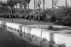 190104_Parc_Central_009 (Stefano Sbaccanti) Tags: bw blackandwhite bn parccentral valencia minox35gl kentmere400 bellinihydrofen analogicait analogue analogico argentique spain spagna selfdeveloped 2019 city
