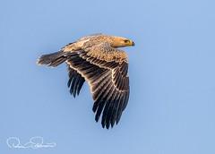 IMG-20180407-WA0044 (TARIQ HAMEED SULEMANI) Tags: sulemani tariq tourism trekking tariqhameedsulemani winter wildlife wild birds nature nikon