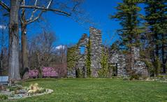 A7307536 (jhallen59) Tags: chanticleer radnor pennsylvania garden spring ruin