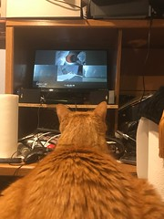 2019 100/365 4/11/2019 THURSDAY - STEVE! watching the SPACEX Falcon Heavy Arabsat-6A Launch 🚀 (_BuBBy_) Tags: aye six 6a arabsat landings landing booster triple rockets rocket days 365days 365 100 feline tabby orange cat nineteen twenty eleven eleventh april launch arabsat6a heavy falcon spacex watching steve thursday 4112019 100365 2019