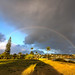 Rainbow @Poipu Beach Park