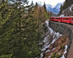 Trenino rosso Bernina (valeriaconti136) Tags: treninobernina cantongrigioni svizzera alberi paesaggiomontano montagna berninapass switzerland paesaggio landscape canoneos80d