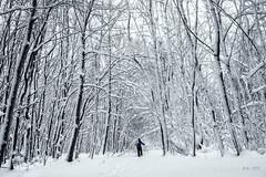 Entering the magical Forest... (Ody on the mount) Tags: bäume em5ii mzuiko1250 omd olympus pflanzen schnee schneeschuhtour schwäbischealb wald winter bw magic magisch monochrome sw snow trees woods stjohann badenwürttemberg deutschland de