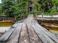 180802-20 La vie sur l'île (2018 Trip) (clamato39) Tags: kohrong island île cambodge cambodia asia asie voyage trip pont bridge river rivière olympus