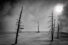 Path is unclear, but there is light (Selectivebits) Tags: winter yellowstone nationalpark snow tree blackwhite absolutblackandwhite bestcapturesaoi aoi elitegalleryaoi exquisitex19 extraordinarilyimpressive callingallangels makewonderx21