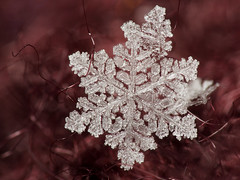 Collected Flakes (Jan 18th 2019, #3) (Doundounba) Tags: pentax k3 pentaxdfa100mmf28wrmacro pentaxhdda14xaw raynox dcr250 focusstack macro extreme cold froid winter hiver water eau crystal flake snowflake flocon neige snow montréal québec topf25
