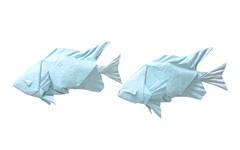 Blue-Green Chromis Pair (folding~well) Tags: origami paper folding fish blue green chromis