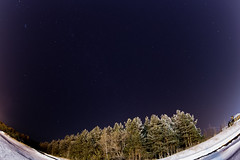 Winter Stars (DmitryYushkevich) Tags: canon canon6d 6d zenitar16 zenitar dslr winter russia russianlens russianwinter sky astrophotography astrophoto trees nightphotos nature naturallight nightshots nightscene