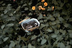(Gab Minks) Tags: bones bird dead death 35mm film