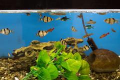 IMG_1434 (Ryany172) Tags: fish aquarium water pet