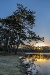 Good morning Malmö - Guten Morgen Malmö (ralfkai41) Tags: landscape landschaft sonne wasser sweden outdoor lake natur sun baum tree schweden slottsparken sunrise sonnenaufgang park water nature malmö see