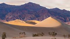 Mesquite Flat Sand Dunes (~Arles) Tags: sand sanddunes footsteps dunes clouds sky outdoors plant deathvalley mesquiteflat california nationalpark usa people nature landscape sunset