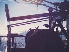 Fischerboot im Hafen - Möve sucht Reste im Netz - 16. Februar 2019 -  Hafen Burgstaaken - Fehmarn - Schleswig-Holstein - Germany (torstenbehrens) Tags: fischerboot im hafen möve sucht reste netz altglas 50mm f17 mit adapter faktor 071 olympus penf m42 ef 36mm f12 16 februar 2019 burgstaaken fehmarn schleswigholstein germany