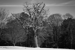 L1006873 (David Stebbing) Tags: blackandwhite trees flickr snow