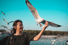 Asian woman feeding seagulls (Patrick Foto ;)) Tags: animal asian background bang beach beautiful beauty bird blue crackling cruise eat feather feed feeding female flying food freedom fun girl gull hand happiness happy lifestyle nature ocean outdoor people portrait pu scene sea seagull seagulls sky summer sunset thailand tourism travel vacation water white wild wildlife wing woman young samutprakan th