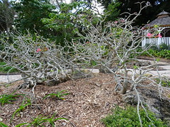 Fauna & Flora South Florida (FloridaGuy1055) Tags: flora fauna plants florida horticulture bush trees