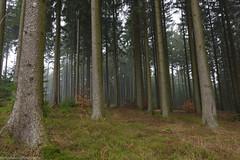 After The Rain (phlpp.hrm) Tags: deister forest trees rain mist fog weather nature outdoors germany lowersaxony niedersachsen deutschland wald bäume regen nebel natur ngc