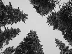 High  #Finland #nature #forest #trees #winter #snow #cold #white #sky #top #blackandwhite #bnw #bnwphotography #bnw_captures #bnwmood #bnw_life #bnw_planet #bnw_greatshots #monochrome #outdoors #photography #olympus #travel (Zilvinas Degutis) Tags: sky forest nature olympus winter cold bnw trees bnwlife bnwplanet white top blackandwhite outdoors bnwmood snow bnwgreatshots finland monochrome bnwphotography bnwcaptures travel photography