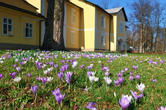 Spring in the castle park ... (ZdenHer) Tags: spring castle park czechrepublic canonpowershotg7xmarkii flower flowers crocuses purple
